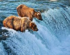 Image result for canadian wilderness pictures