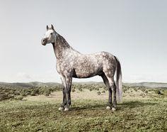 love grey horses!