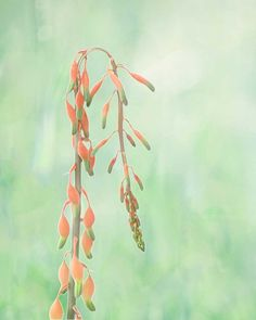 Thinking of Spring Amazing Pictures Digital Download JPG Photo by Michael Taggart Photography flower orange coral salmon green wistful on Etsy, $5.00
