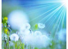 sunshine & dandelions