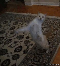 click the link... animated gif! http://www.themockdock.com/wp-content/uploads/2012/05/funny-gif-cat-dancing-two-legs.gif