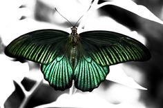 Impresion by Aleksandra Bandomir on 500px http://500px.com/photo/59605738