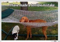 A dog and a hammock