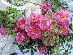Ещё один новый цвет - розовая фуксия.  В каруселе можно посмотреть цветосочетания, оттенки и миксы.  Мы за яркое лето!   Цветы ручной работы The TEA Garden  #the_teagarden #the_tea_garden #handmadeflowers #handmade #материалыдлярукоделия #материалыдлятворчества #цветочнаямастерская #цветыдляскрапа #скрапбукинг #цветыручнойработы #ручнаяработа