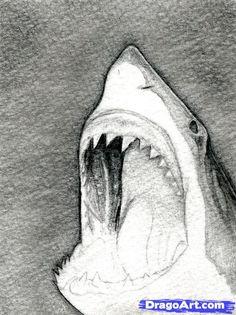 how to draw a shark head step 8