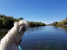 Lovin' Life Holly had mastered the kayak October 24, 2017