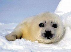 Image from http://3219a2.medialib.glogster.com/media/c1/c18d284641f38ca9c8ea1f39164bfa6d8bb985655007924149589349b06ff48e/imagenes-animales-jpg.jpg.