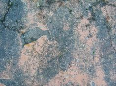 concrete-texture0020 How To Dry Basil, Concrete, Herbs, Texture, Free, Surface Finish, Herb, Pattern, Medicinal Plants