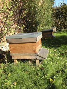 Keeping Backyard Beehives: Backyard Beekeeping For Beginners - Keeping bees in the backyard is a natural extension of gardening, and means ready pollination for your flowers and plants, as well as a generous honey supply. Read this article to learn about Beekeeping For Beginners, Gardening For Beginners, Garden Types, Organic Vegetables, Growing Vegetables, Root Vegetables, Raising Bees, Raising Chickens, Backyard Beekeeping
