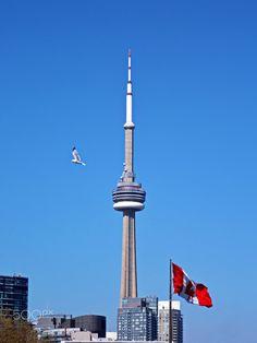 CN Tower - Sunny Day in Toronto Ontario, Canada