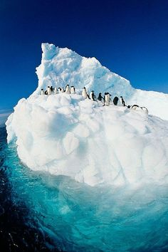 ponderation:  Tip of the iceberg….Antarctica by Colin Monteath