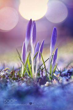 Spring is here! by StefleiFotografie. @go4fotos