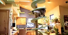 Professional Designer Turns Ordinary Home Into A Cat Paradise! | The Animal Rescue Site Blog