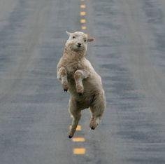 http://www.anda.jor.br/18/08/2013/fotos-mostram-animais-expressando-felicidade
