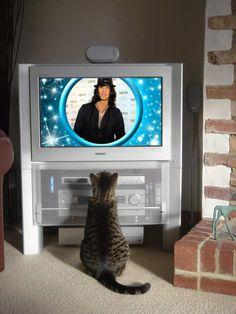a cat watch tv