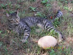 Abby curled around the giant mushroom in the yard - October 2005