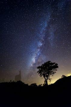 Milkyway in Sierra Nevada de Santa Marta- Cerro Kennedy - Colombia  #Colombia #Milkyway #stars