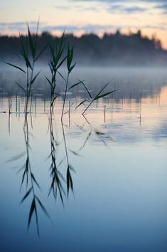 Zen in Nature: Serendipitous Wanderings