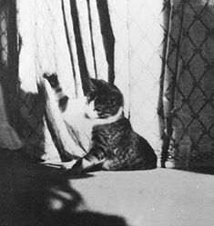 Grand Duchess Olga's cat.  His name was Vas'ka (or, in English, Basil).