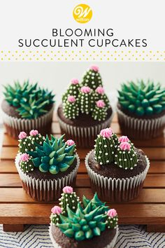 Turn your cupcakes into little mini gardens with these Blooming Succulent Cupcakes. Decorating tips can be used for more than just flowers, and with some star and round tips, you can create lovely cacti that look like the real deal! #wiltoncakes #cupcakes #cupcakeideas #buttercreamcupcakes #cupcakedecorating #succulentcupcakes #beginner #easy #basic #simple #desert #buttercreamsucculents #succulents #succulentparty #themedparty #birthdayparty #birthdaycupcakes #summerbaking #summercupcakes
