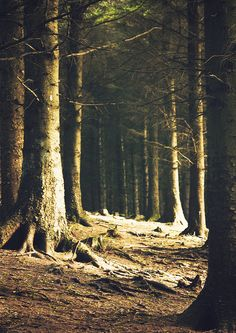 "Ticknock Forest, Ireland  On my bucket list now, just because ""Ticknock"" is a fantastic name."