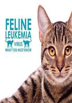 Feline Leukemia Symptoms In Kittens Funny Dog Videos, Funny Dogs, Leukemia Symptoms, Sneaky Cat, Feline Leukemia, Cat Shedding, Weird Creatures, Cat Love, Back Home