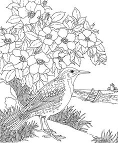 Free Printable Coloring PageNorth Dakota State Bird And Flower Western Meadowlark Wild Prairie Rose Educational Printables