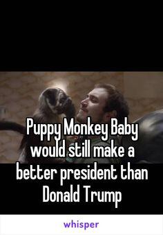 Puppy Monkey Baby would still make a better president than Donald Trump