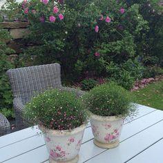 Kveldsstemning i hagen  ~~~~~~~~~~~~~~~~~~~~~~~~~~~~~~~~ Evening mood in the garden  ~~~~~~~~~~~~~~~~~~~~~~~~~~~~~~~~ #hjemmehosmeg #hagenvår #hageglede #bakgården #hagefokus #hagelivoguterom #hagetidend #flowers #gardens #inspiration #vakrehager #bestemorshage #gammeldagshage #levlandlig #lantliv #hageselskapet #boligdrøm #vakrehjemoginteriør #skandinaviskehjem #skonahem #nordiskehjem #norgeshjem #interiorbyhanne #interior9508 #vestavindsveio #grønnglede #mynorwegianhome #juni2016