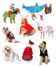 The funniest Halloween dog costumes! Left shark, a Kong, Marilyn Monroe,and more! Hilarious.