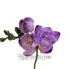FiftyFlowers.com - Purple Freesia Flower