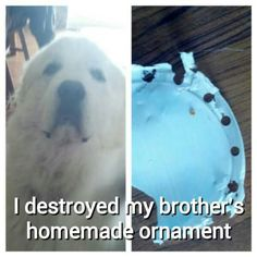 Great Pyrenees #puppybeingbad Dog shame board