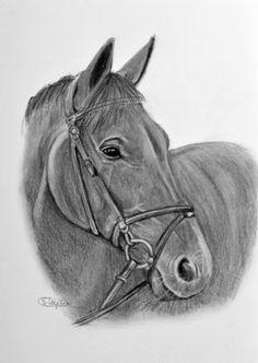 Prachtige kunstkaart met hand getekend paardenhoofd in zwart/wit voor de echte paardenliefhebber.  Deze kaart verstuur je via www.kaartje2go.nl  #dieren #paard #paarden #horses