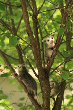 These little troublemakers climbing in the treetops. | 44 Baby Animals Who Are Made Of Actual Sunshine