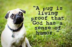 A pug is living proof that God has a sense of humor.