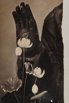An ominous hand sheathed in a black leather glove rises behind a row of plants…