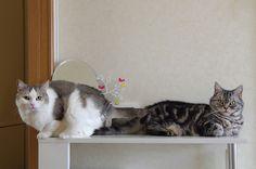 里親さんブログ食欲アップ中の猫 - http://iyaiyahajimeru.jp/cat/archives/66131