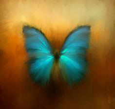 Butterfly by RHADS.deviantart.com on @deviantART