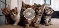 Diese Kätzchen sind einfach zu süß um wahr zu sein!