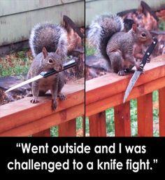 Hood squirrel don't fuck around.