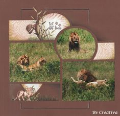 fort comme un lion Scrapbook Designs, Scrapbook Page Layouts, Scrapbook Pages, Baseball Scrapbook, Afrique Art, Multi Photo, Photo Layouts, Wedding Album, Zoo Animals