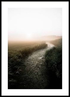 Misty field Poster in the group Prints / Sizes / 50x70cm | 20x28 at Desenio AB (2707)