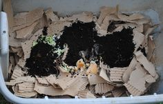 Vermicomposting | Fertilize With Worm Castings