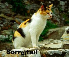 Sorreltail, born at the same moment as Cinderpelt becomes medicine cat, was the very first to step foot outside the nursery.  She is a sturdy, slender, dappled, tortoise-shell-she-cat with amber eyes, and a white chest and white paws.  Her mentor, Sandstorm, and her litter mates, Rainpaw and Sootpaw, had helped her earn her warrior name; from Sorrelpaw to Sorreltail.