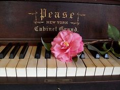 Music and flowers...a beautiful combination adelightsomelife.com