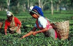 Jay Shree Tea packs its teas right in the gardens to preserve their fresh aromas. Its gardens have constantly won accolades in terms of price and productivity and several awards over the years for quality: http://www.jayshreetea.com/