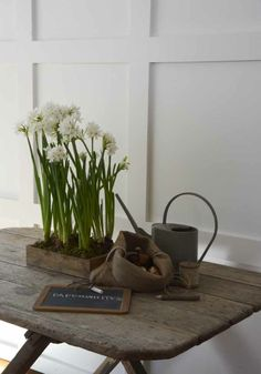 spring - shallow box planted with jonquils or other spring bulbs Interior Exterior, Interior Design, Deco Nature, Spring Bulbs, Spring Plants, Spring Has Sprung, Little Boxes, Wooden Boxes, Houseplants