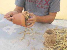 Fabriquer un abri à forficules pour lutter contre les invasions de pucerons