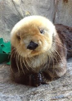 #Cute #Otter #Animals