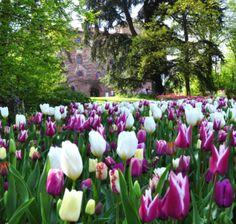 L'AGENDA EVENTI DELLA PRIMAVERA PIÙ BELLA D'ITALIA!    Quali sono i vostri propositi per la Primavera? Se ancora non ne avete, oppure volete qualche spunto, consultate la nostra agenda con la selezione degli eventi più fioriti della Primavera 2013 nei parchi e giardini più belli d'Italia!!    Un tripudio di fiori e colori, con alcune delle fioriture più belle d'Europa! Per rifarsi gli occhi, le narici ed emozionare i cuori con quanto di più bello la natura ha da offrire!